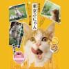[東京限定]写真家 岩合光昭さんコラボパッケージ 東京クッキーズ 6月1日より東京駅改札内『東京銘品館南口』で発売開始‼️